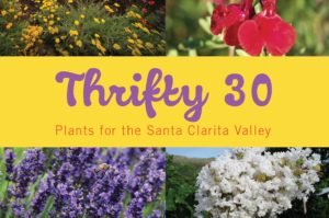 SCV Water - Thrifty 30 Plants for the SCV - Brochure Cover