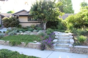 House front landscaping